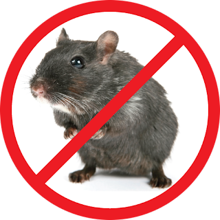Clean All Over pest control service dublin